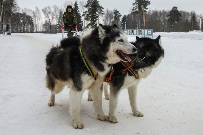 husky_russian_military3